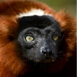 μάθετε μαδαγασκικά